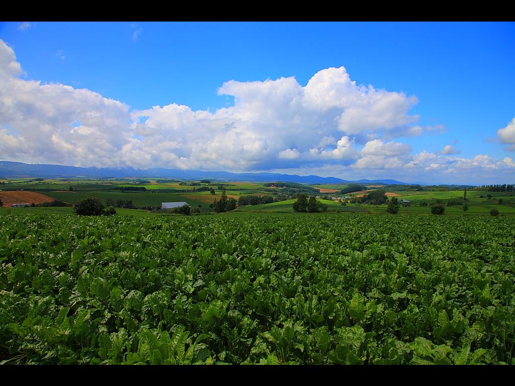 三愛の丘展望公園からの風景 左クリックで美瑛パッ... 三愛の丘展望公園からの風景 スポンサーリ