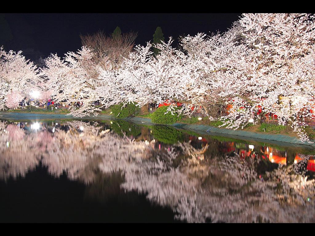 臥竜橋上から見る夜桜 左クリックで臥竜公園 夜桜... 壁紙サイズ Tweet 臥竜橋上から見る
