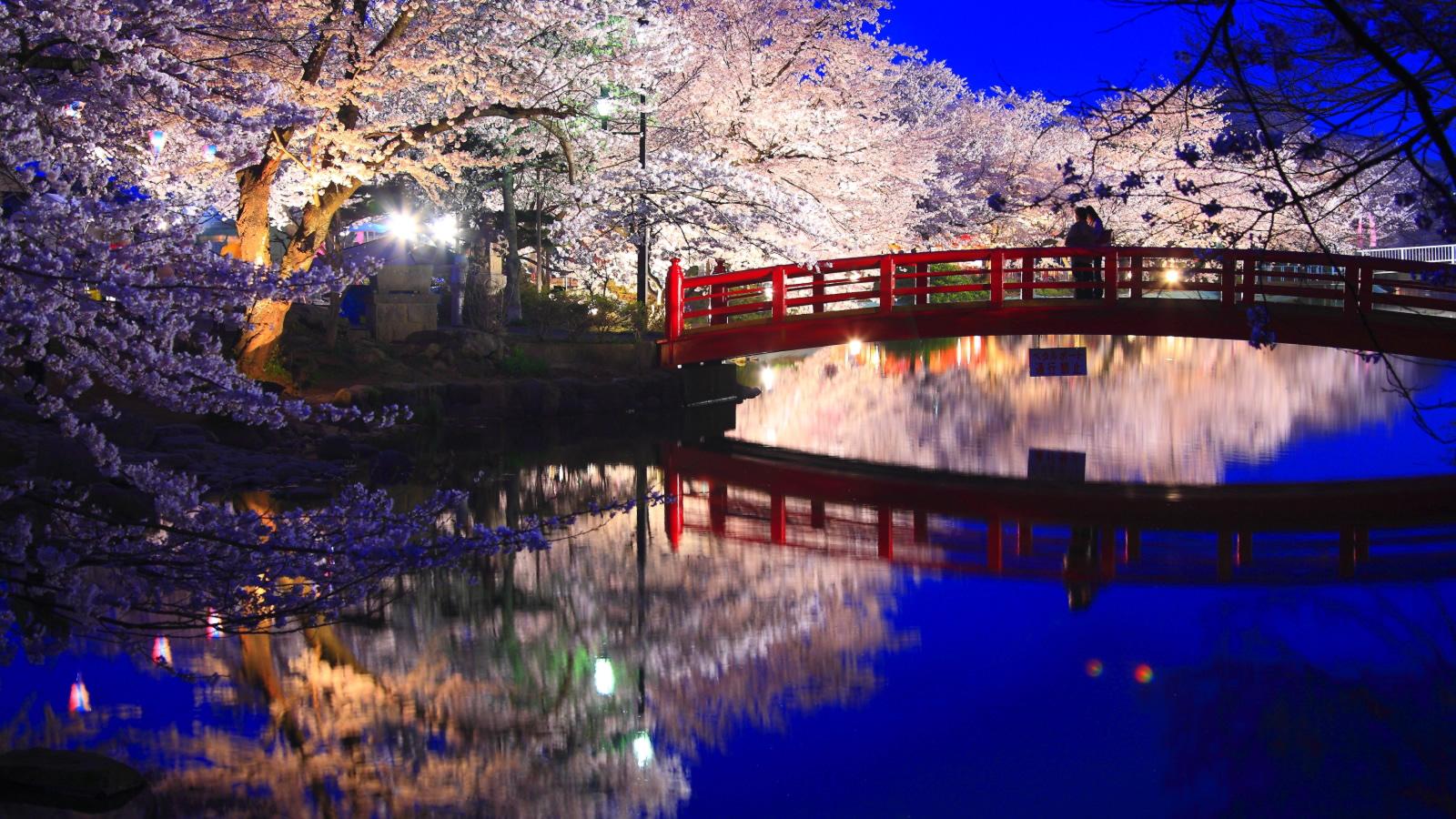 臥龍公園 夜桜1600x900サイズ