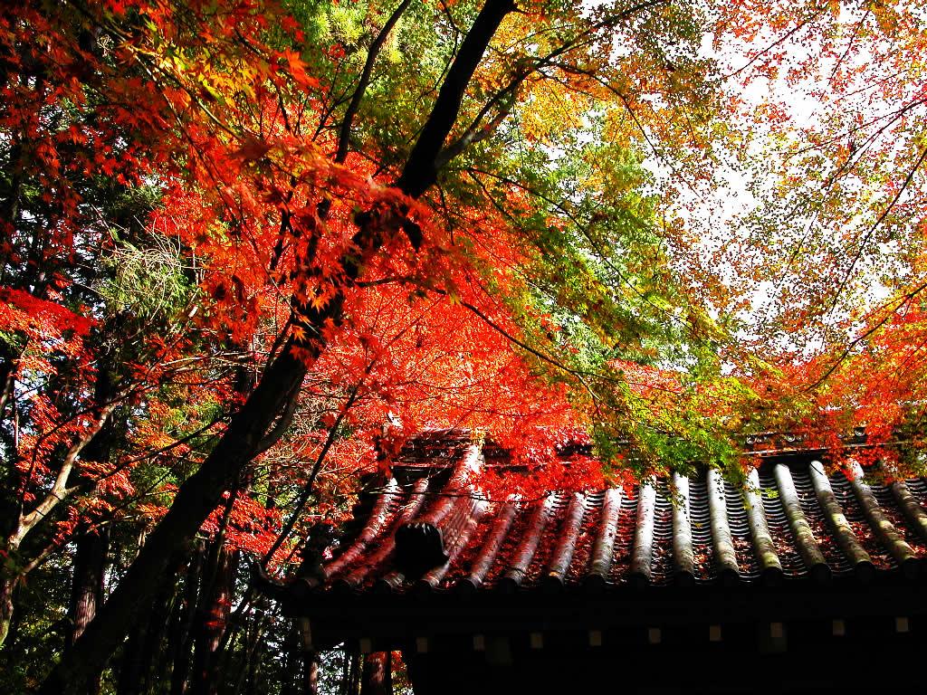 京都光明寺 拝観料 左クリックで京都光明寺へ右クリック背景に設定で壁紙へ  壁紙サイズ Twee