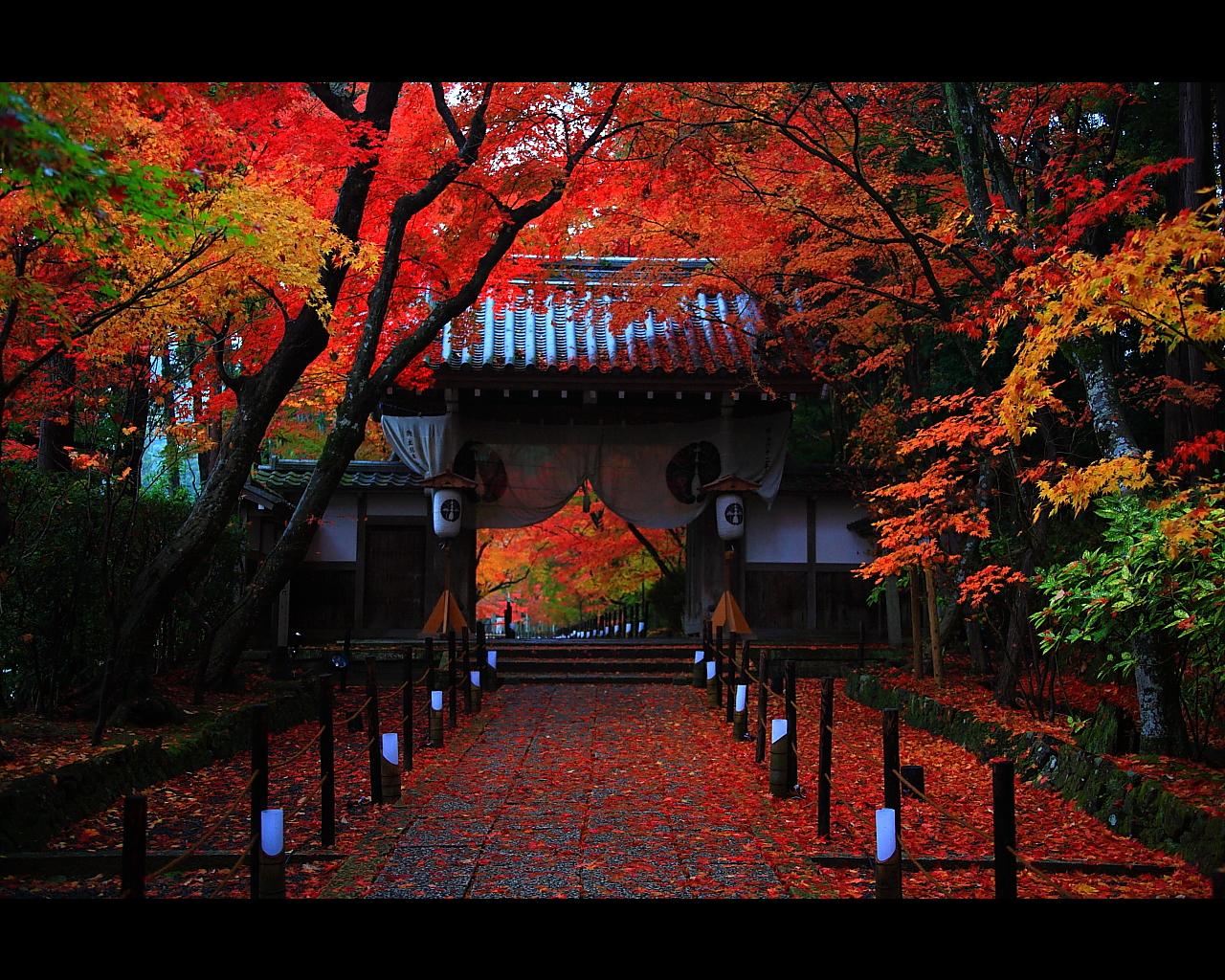 光明寺紅葉参道と門にかかる紅葉1280x1024サイズ
