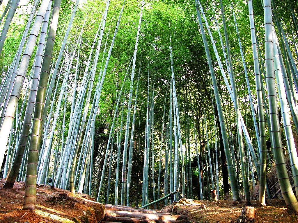 the benefits of bamboo and bamboo clothing essay