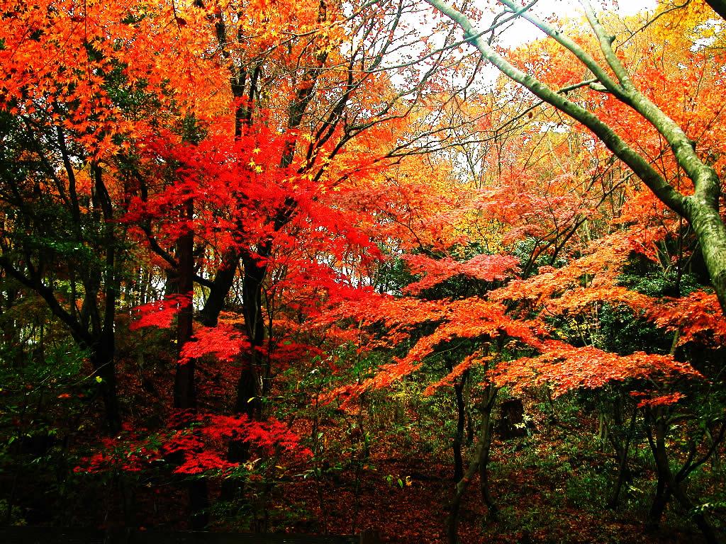 神戸森林植物園・長谷池付近の紅葉