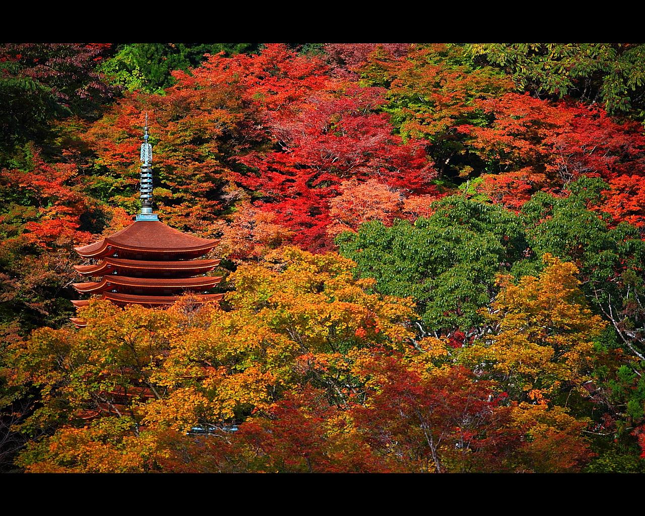 談山神社十三重塔と多武峰の紅葉...